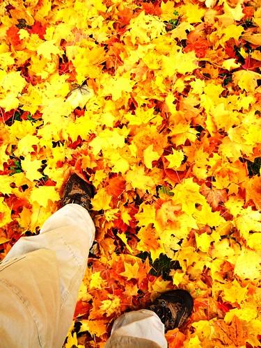 踏在波希米亞的秋色中