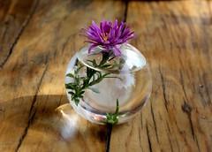 mor (nilgun erzik) Tags: trkiye istanbul masa mor vazo cicek macka ahap tahta fotografkraathanesi fotografca ekim2008