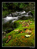 Fall Creek (Bonell Photography (dasbull)) Tags: trees usa blur mountains color green fall water leaves creek lumix washington moss stream exposure time perspective running falls timeexposure panasonic wa olympic mossy olympicmountains fz50 wynoochee dasbull ronbonell