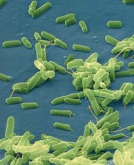 Фото 1 - Новый класс антибиотиков