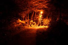 Light my Way (binaryCoco) Tags: city light night dark licht nacht dunkel stadtlicht damniwishidtakenthat