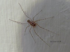 Spinne an der Wand - Spider at the Wall 02