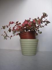 IMG_0139 (Plantules) Tags: