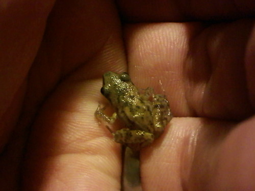My Froggy Friend sitting in my hand