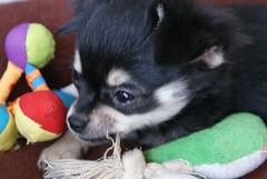 Girl (Miz*) Tags: dog animals mydog