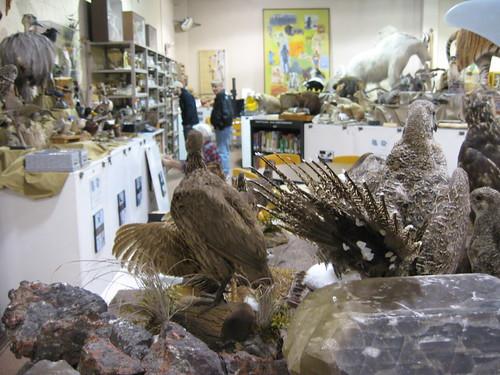 Smithsonian Naturalist Museum - Leesburg, VA