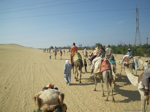 Camel Ride 30