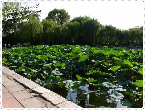 大明湖09