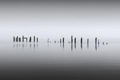 liilii n /i li   i.  i. ii  i. li-i . i  lii i. i (Chee Seong) Tags: uk winter bw birds misty canon scotland foggy lochlomond canon2470mmf28l 400d