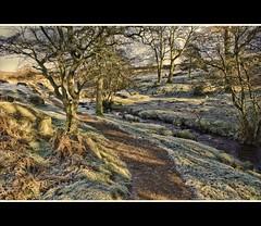 A Winter's Walk (Steel Steve) Tags: chapeau goldenglobe aplusphoto theunforgettablepictures qualitypixels magicdonkeysbest obq