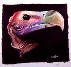 carroero (nhdart.com.ar) Tags: animal ojo negro lapiz muerte retratos nicolas pico pajaro dibujos ilustracion oscuro acrilico herrera arni carroero arniherrera