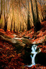 king of seasons, Autumn (m_yousefi) Tags: autumn iran  canon30d   mywinners abigfave goldstaraward