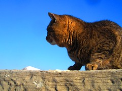 CHRISTMAS TRUCE ON MUJA'S QUAY -01 TREGUA NATALIZIA SUL MOLO DE MUJA (pierovis'ciada) Tags: gatti molo trieste istria incontro muggia nicetomeetyou muja istriani ysplix