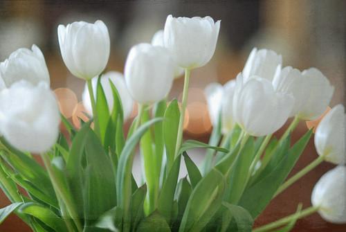 tuliptext1