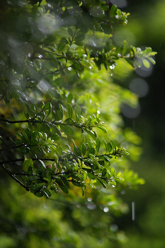 green in the rain