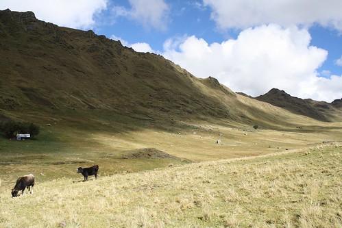 Putis landscape