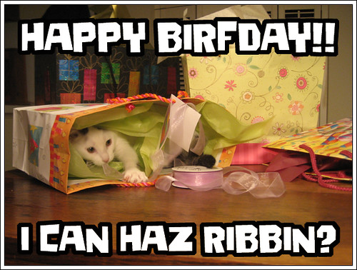 lolcat birfday