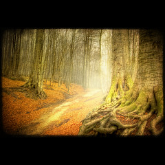 Winter Light (Dimitri Depaepe) Tags: park trees winter mist leaves woods belgium belgie path lane tervuren hdr abigfave superbmasterpiece bratanesque