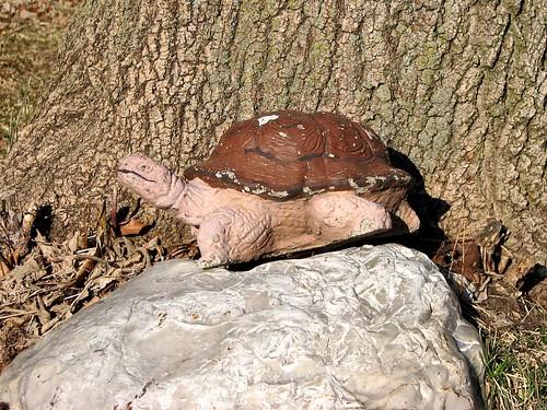 031608 - Turtle 2