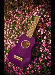 My new purchase... (tweeny) Tags: flowers purple ukulele