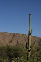 IMG_1017 (quinn.anya) Tags: arizona saguaronationalpark