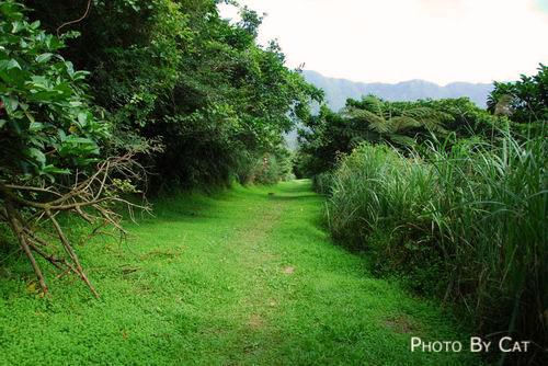 前往鷹石尖的綠色草坪