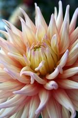 Cuando me explota el corazón de alegría (darkside_1) Tags: madrid españa flores colores belleza supershot mywinners abigfave damniwishidtakenthat sergiozurinaga bydarkside eljardínsecreto