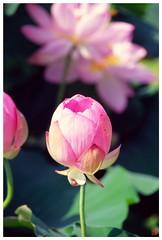 Lotus 20080712 #06