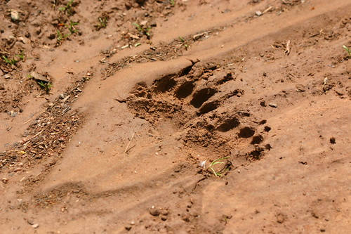 Badger Prints