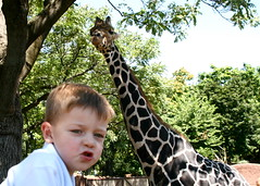 Who is the better giraffe?