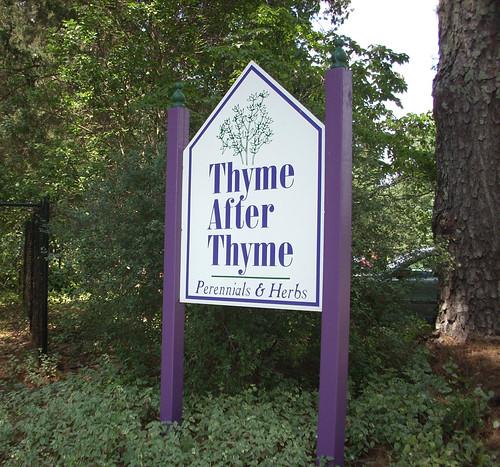 THYME 9147