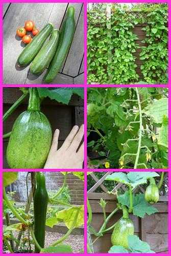 Garden Aug 08