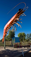 The Big Prawn (C) 2008