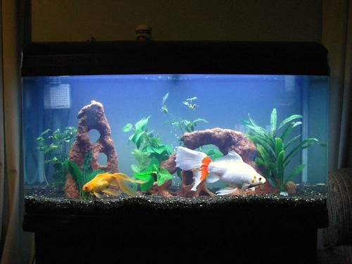 Clean Fish Tank