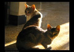From the Archives.. (Gaurav_Patil) Tags: morning columbus two urban pets sunlight india cute home colors animals cat canon indoor konkan s5is canons5is urbancolumbus pptadka20080923