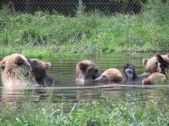 Wild Safari 082