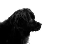 (_Zahira_) Tags: dog white black blanco animal lafotodelasemana perfil negro olympus perro nd e500 uro 100vistas interestingness351 i500 p1f1 ltytrx5 ltytr2 ltytr1 ltytr3 ltytr4 ltytr5 ltytr6 lfs102008
