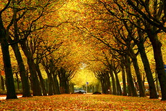 Golden strip in Amsterdam (kees straver (will be back online soon friends)) Tags: autumn trees red sky orange holland tree green fall nature water netherlands colors leaves car amsterdam yellow forest landscape gold vanishingpoint leaf earth branches herfst nederland blad explore leafs bos petrolstation 30d abigfave keesstraver