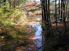 harold parker state forest (helium heels) Tags: autumn fall nature forest october foliage stateforest haroldparker haroldparkerstateforest