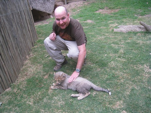 3-month old cheetah cub