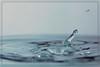 Ordine e caos (Giancarlo Mella (OFF)) Tags: italy macro canon photography photo drops colore digitalcamera acqua canon100mmmacro supershot canon100 canoneos50d giancarlomella