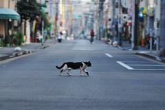 DSC_5790_1 (H2@Japan) Tags: street japan cat tokyo nikon kitty 東京 猫 d300