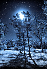 One snowy night..... (believer9) Tags: blue trees winter light moon snow silhouette pine night bravo shadows falling soe ogm bej mywinners abigfave platinumphoto theunforgettablepictures alemdagqualityonlyclub obq