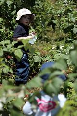 exploring the raspberry 'isle'