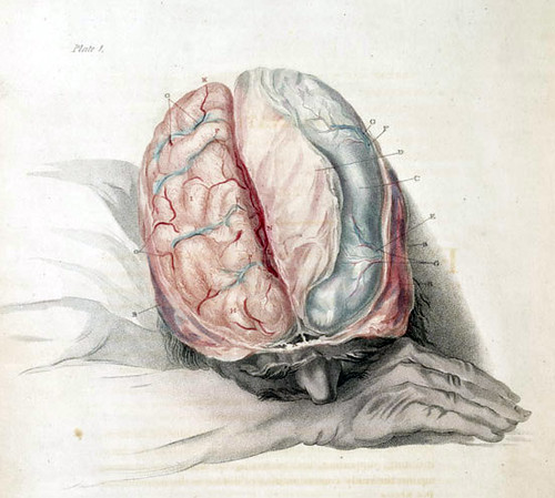 anatomy of the brain engraving by charles bell