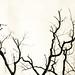 Quelques branches un 25 décembre