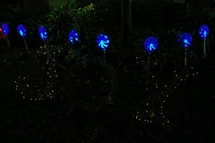 IMGP6527 (jacobsons) Tags: sandiego christmaslights pointloma garrisonstreet