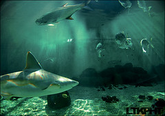 (oli merida) Tags: blue light fish water swimming swim aquarium shark sand nikon rocks underwater florida cyan bubbles fisheye filter bubble sarasota sharks grouper filtering mote cmyk 941 d80 ltkpht