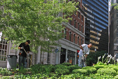 BostonHedgeTrimming (fotosqrrl) Tags: urban boston workers landscaping massachusetts streetphotography financialdistrict southstreet raking summerstreet hedgetrimmer trashbarrel