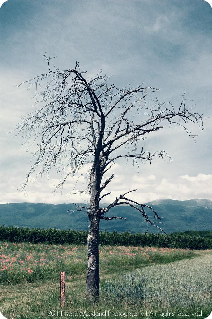 Whoopie Pies Tree Russin 1 3 bis